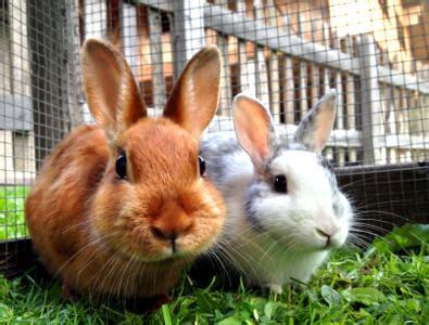 stall für kaninchen kaninchen verhalten richtig deuten hagebau de