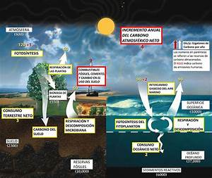 File Espa U00d1ol Carbon Cycle Jpg