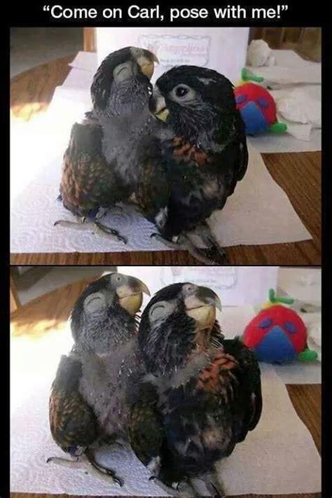 absolutely  bird memes