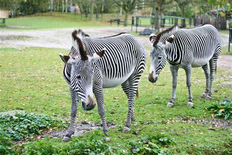 Zoologischer Garten Routenplaner by Zoologischer Garten Planckendael Tourismus Bonheiden