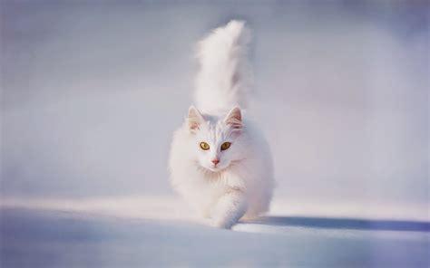foto mit wei 223 en katze im schnee hd hintergrundbilder