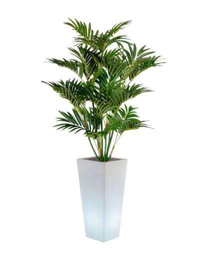 vaso piante noleggio pianta palma ecologica e vaso y pot per eventi
