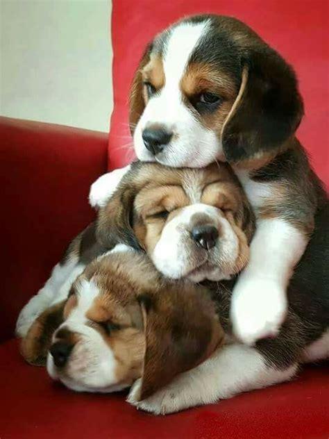 cute puppies  luvbat