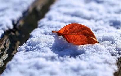 Snow Leaf Wallpapers Autumn Macro Desktop Rusty