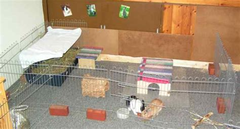 kaninchen in der wohnung kaninchen info kinderseite wohnung