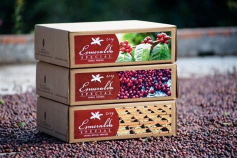 Private collection lots are made up of a blend of. Panama Geisha from Hacienda La Esmeralda   Eighty Seven Plus