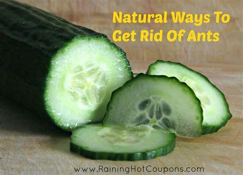 crock pot in walmart 10 ways to get rid of ants