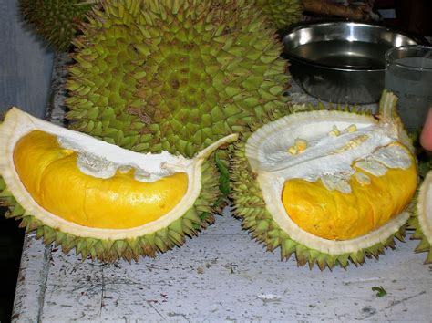 durian kupas by ucok durian buah durian montong images