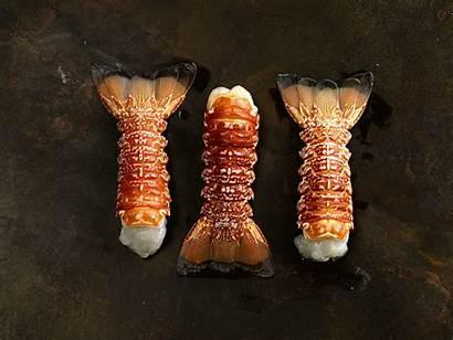 Lobster Tail African South Ocean Shrimp