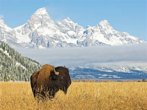 Grand Teton National Park | Learn About This RV Destination