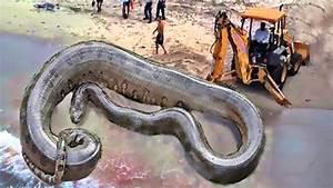 Titanoboa Still Alive? World's Largest Snakes - YouTube
