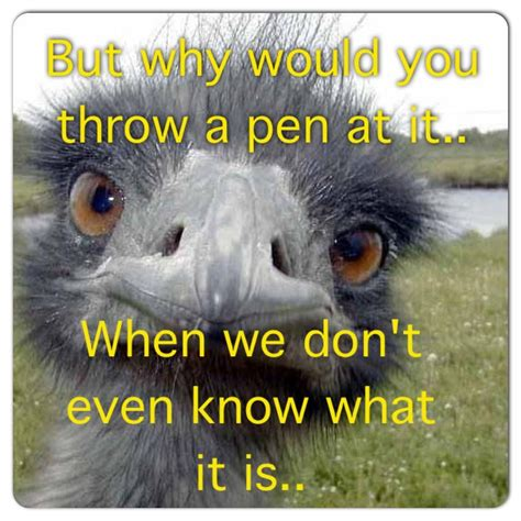 Ostrich Meme - kevin hart ostrich memes pinterest kevin hart ostrich kevin hart and humor