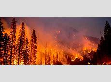 Simposio Incendios Forestales, su impacto sobre las