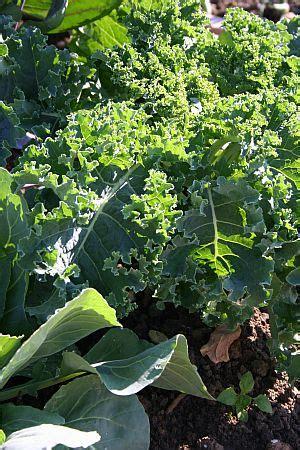 Gemüse Und Kräuter Für Den Schatten Wwwtintodetipps