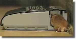 Comment Tuer Une Souris : d ratisation tout savoir sur la d ratisation devis anti rats souris le d ratiseur france ~ Maxctalentgroup.com Avis de Voitures
