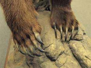 grizzly bear claws Quotes