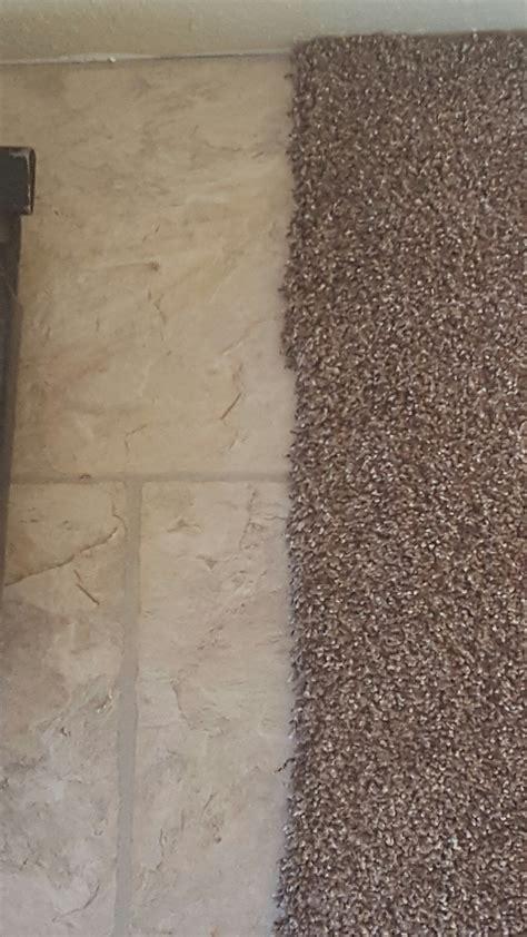 top  reviews  home depot carpet