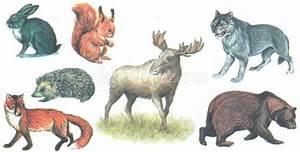 эссе на тему домашние животные