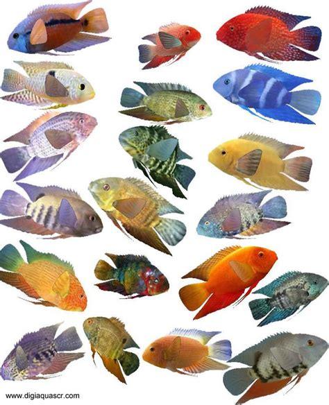 kind  fish tank  kinds  fishing