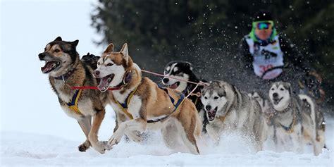 schlittenhunde rennen  nassau wieder um die wette