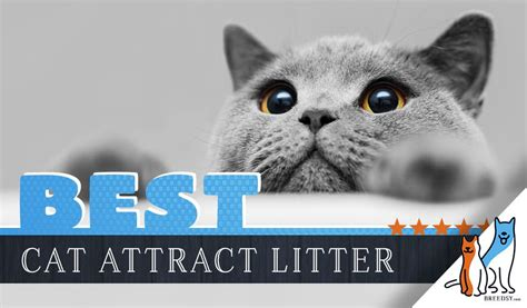 litter cat attract box cats using