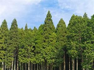 Baum Pflanzen Anleitung : anleitung fichte pflanzen schrittweise erkl rt ~ Frokenaadalensverden.com Haus und Dekorationen
