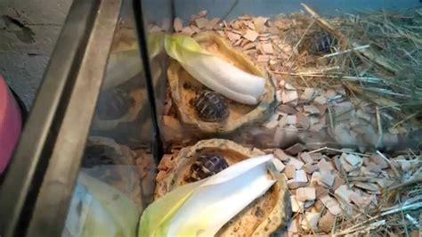 fabriquer ou refaire un terrarium tortue hermann youtube