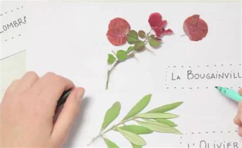Dies wollen wir verhindern und stellen dir hier eine eür vorlage zur verfügung, die du einfach mit. Herbarium Deckblatt Vorlage Zum Ausdrucken