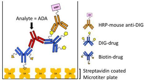 AN1606: Assessing Ligand-Binding Assay (LBA) Reagent Proteins