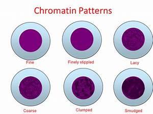 chromatin patterns laboratories