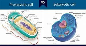 Differences Between Prokaryotic And Eukaryotic Cells