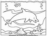 Dolphin Coloring Pages Printable Ocean Clipart Outline Silhouette Exercise Warm Learning Students Second Would Young sketch template