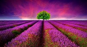 Most Beautiful HD Wallpapers For Desktop – HD Wallpapers ...