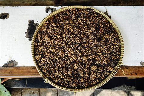 canap le plus cher du monde kopi luwak le café le plus cher du monde à base de crottes