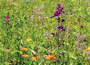 Welche Blumen Für Bienen : summer dreaming sch nste blumenwiese f r bienen co ~ Eleganceandgraceweddings.com Haus und Dekorationen