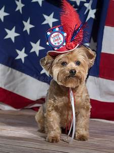Land Of The Free Patriotic Dog Stock Image - Image of free ...