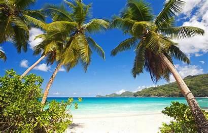 Beach Summer Sea Tropical Palm Trees Shore