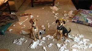 Scold Them All You Want, Dogs Feel No Shame Says ...