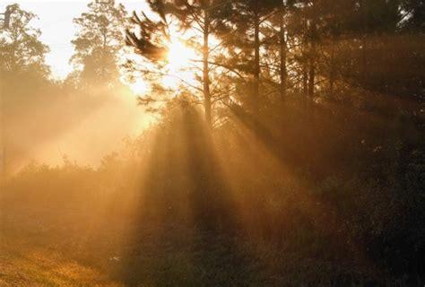 morning fog sun rays   stock photo public domain