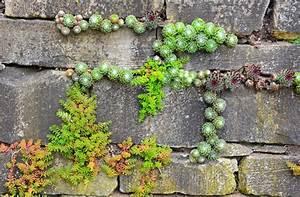 How to build a pocket garden install it direct for Katzennetz balkon mit scout garden