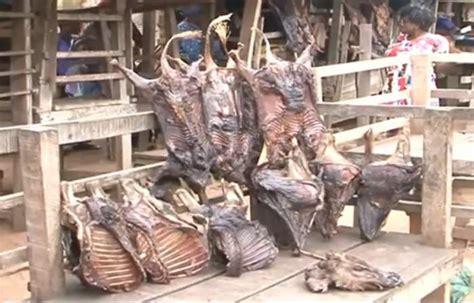 ebola bush meat business gradually picks   kwara