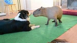 Dog and Capybara - YouTube
