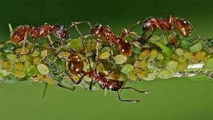 Was Gegen Ameisen : was hilft gegen armeisen ameisen bek mpfen was hilft gegen ameisen im garten ameisennest bek ~ Whattoseeinmadrid.com Haus und Dekorationen
