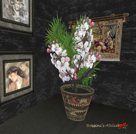 second marketplace magnolia in pot