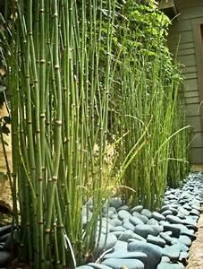 Bambus Pflege Zimmerpflanze : zimmerbambus kaufen was muss man davor wissen und beachten ~ Frokenaadalensverden.com Haus und Dekorationen