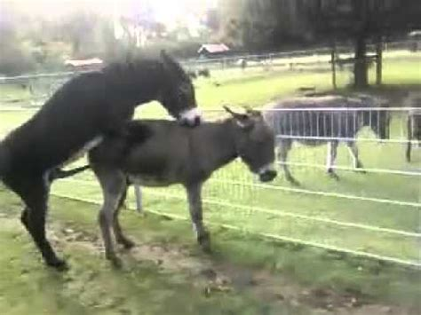 animals mating in the wild videos breeding animals youtube