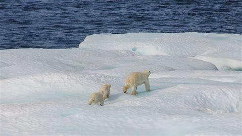 understanding arctic sea ice loss  alan turing institute