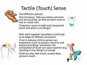 Tactile (Touch) Sense Two different systems ...