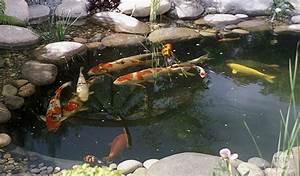 Bac à Poisson Extérieur : jardin avec bassin poisson akoi ~ Teatrodelosmanantiales.com Idées de Décoration