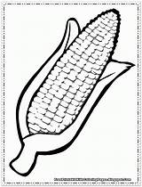 Corn Coloring Pages Cartoon Printable Thanksgiving Cob Template Drawing Crafts Colouring Cliparts Clipart Preschool Vegetable Grain Printables Sheets Craft Sacks sketch template